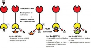 Figure 1. T790M driven drug resistance and mechanism of action of different generations of EGFR TKIs.